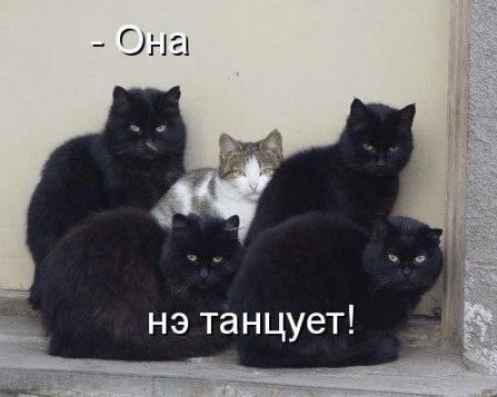 коты-секюрити.png