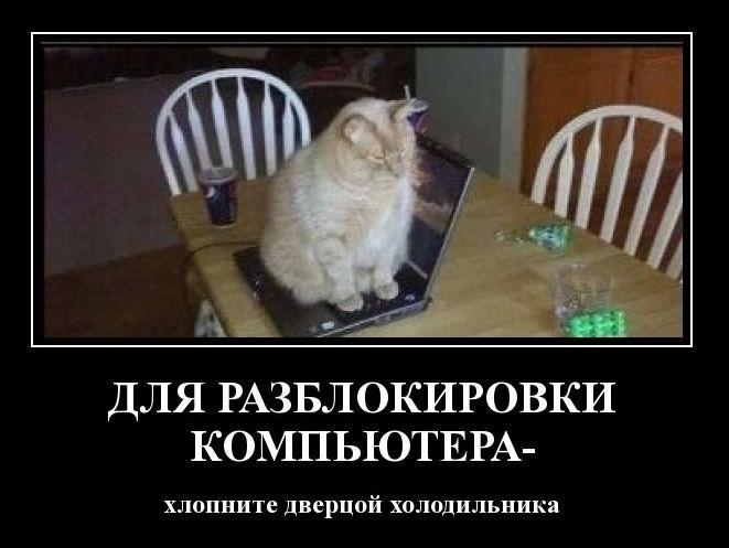 разблок-кот.jpg