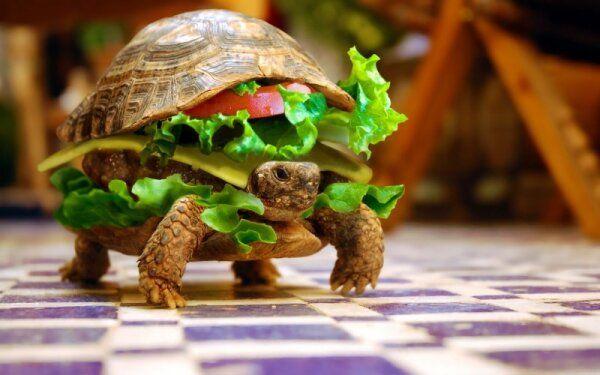 syr-cherepaxa-burger-s-k23.jpg